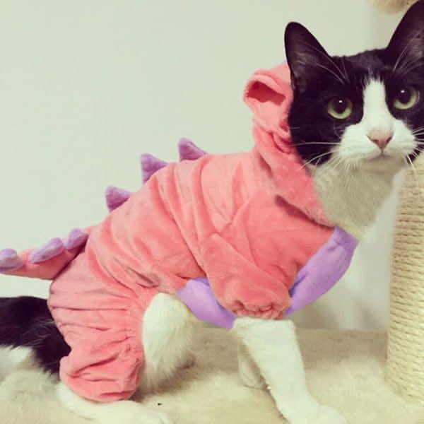 dinosaur-cat