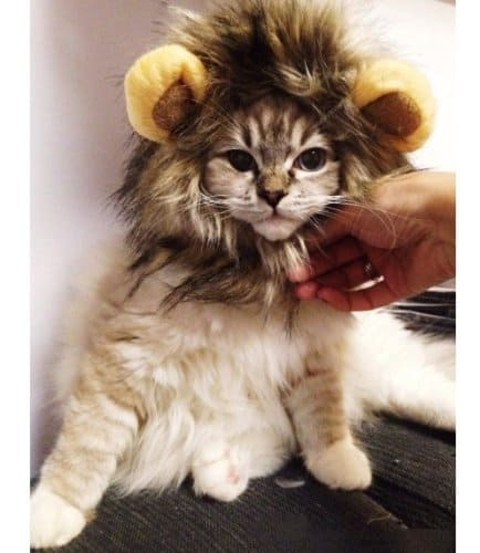 best halloween costume for cats lion