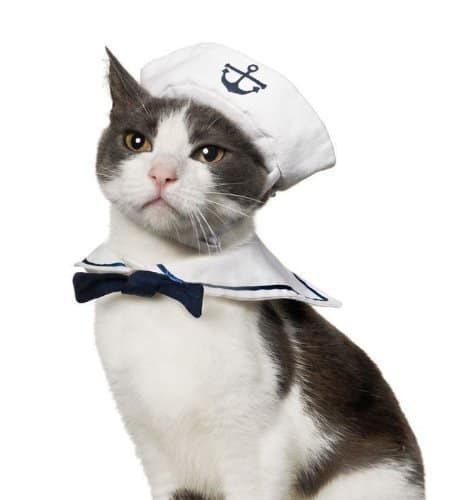 best halloween cat costume sailor