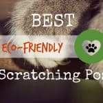 Best Foods for Cats with Sensitive Stomachs