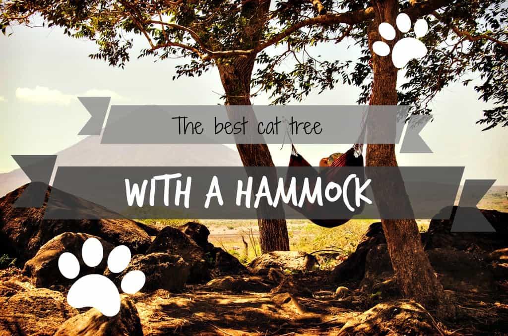 the-best-cat-tree-with-hammock-header