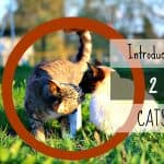 10 Best Cats for Cuddling | Cats Who Love to Snuggle!