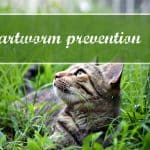 The 5 Most Common Health Problems In Cats