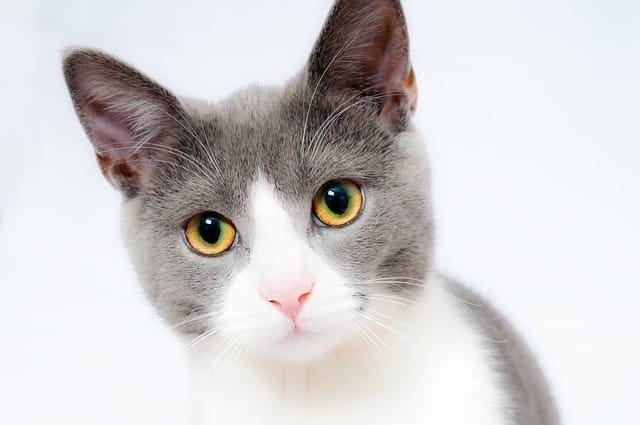 Most Common Health Problems In Cats | Fluffy Kitty