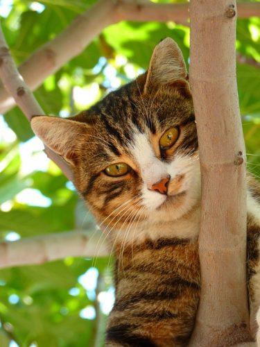 best ceiling high cat tree