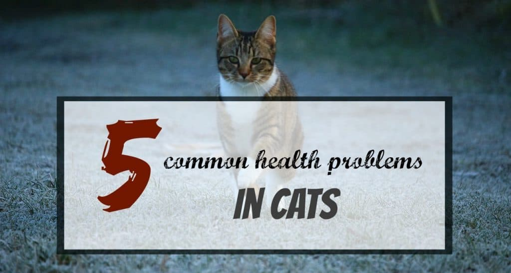 common-health-problems-in-cats-header