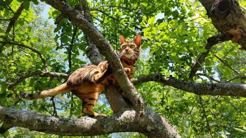 cat has diarrhea but seems fine - Fluffy Kitty