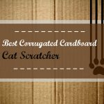 Best Heartworm Prevention For Cats