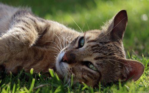 cats and ibuprofen