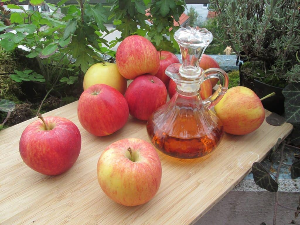 Can cats drink vinegar? Apple cider vinegar for cats