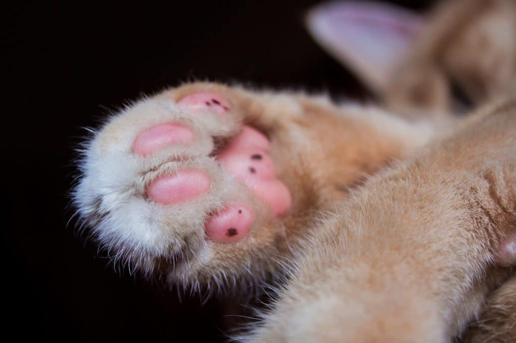 Should i insure my cat?