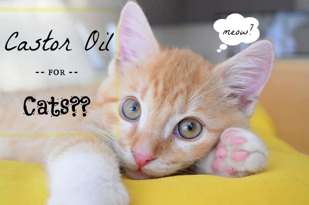 Castor Oil for Cats - Fluffy Kitty