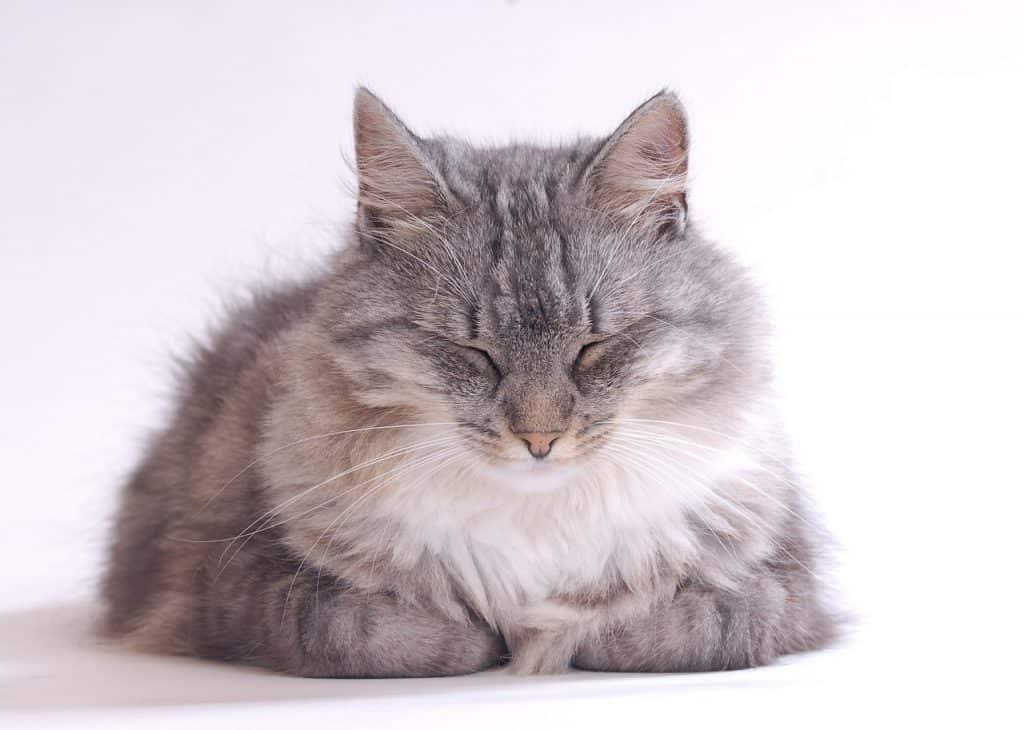 Castor oil for cats