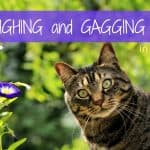 Should I Insure My Cat? Getting Your Pet Health Insurance