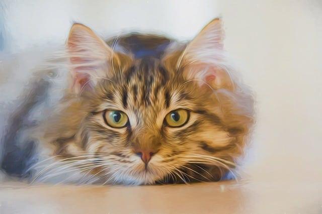 My cat has diarrhea but seems fine. Fluffy Kitty