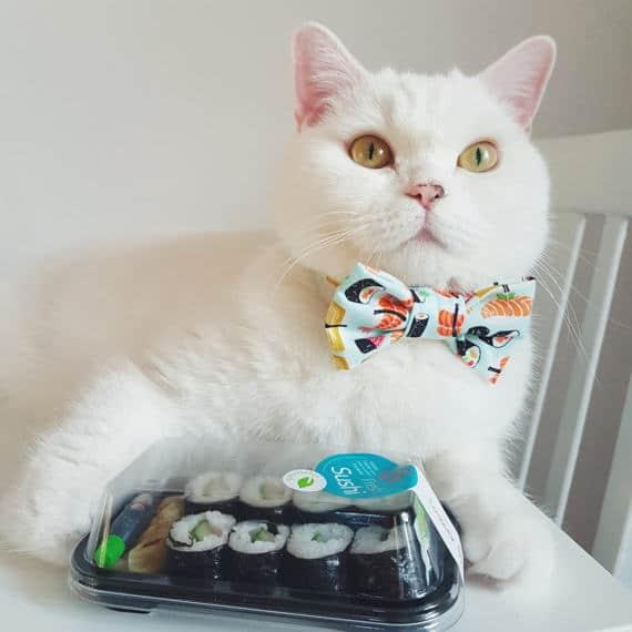 Best cat collars - Fluffy Kitty