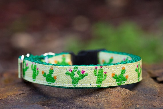 Best cat collar with bell