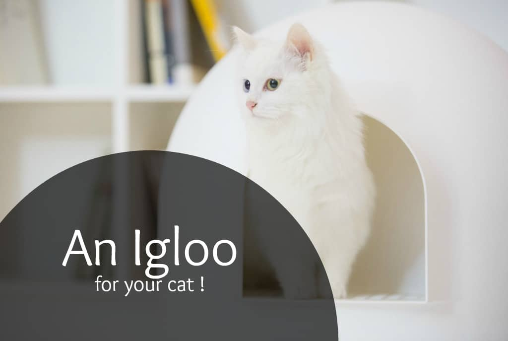 Igloo cat litter box review