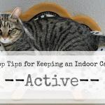 The Best Cat Litter Mat: Fluffy Kitty's Selection