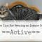 Top Tips for Keeping an Indoor Cat Active