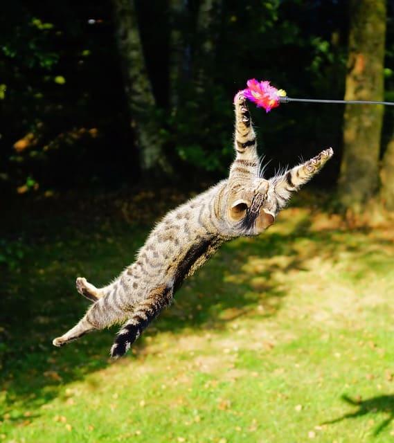 Keeping an Indoor Cat Active