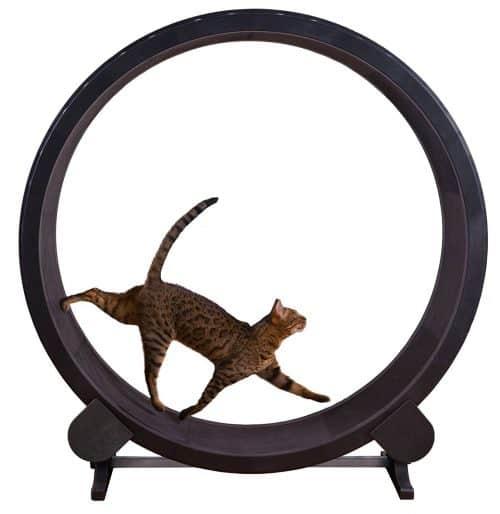 cat wheel