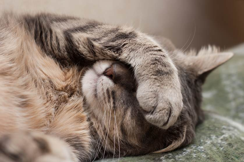 Cat Throwing up Clear Liquid: Why and What to Do?   Fluffy Kitty