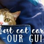 How Often Do Cats Need Shots ? Our Guide