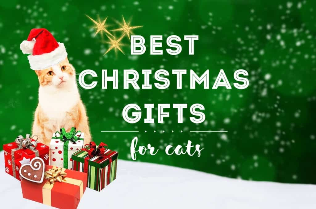 Best Christmas Gifts for Cats   Fluffy Kitty
