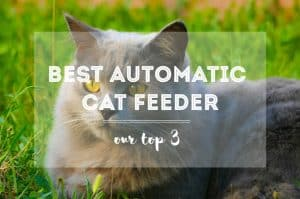 Best Automatic Cat Feeder | FK
