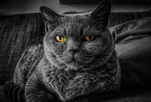 Why Do My Cat's Eyes Water? | Fluffy Kitty | why do my cat's eyes water?