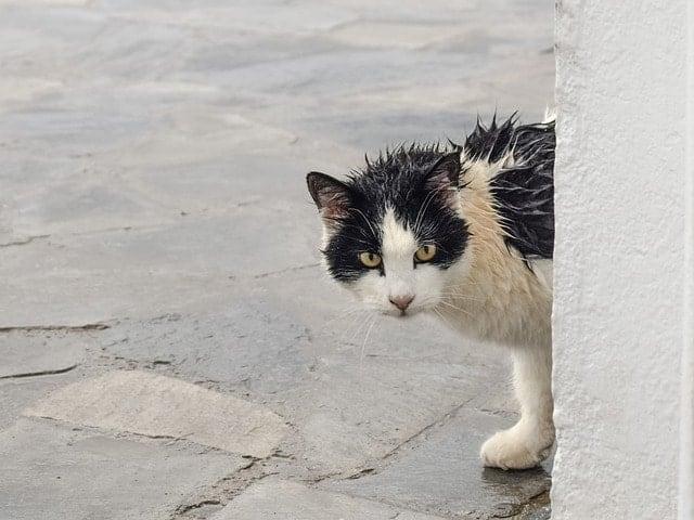 How to Make Homemade Cat Shampoo | Fluffy Kitty
