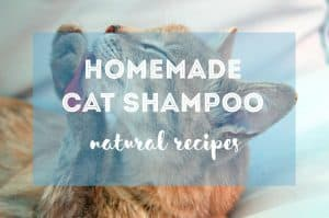 How to Make Homemade Cat Shampoo | Fluffy Kitty