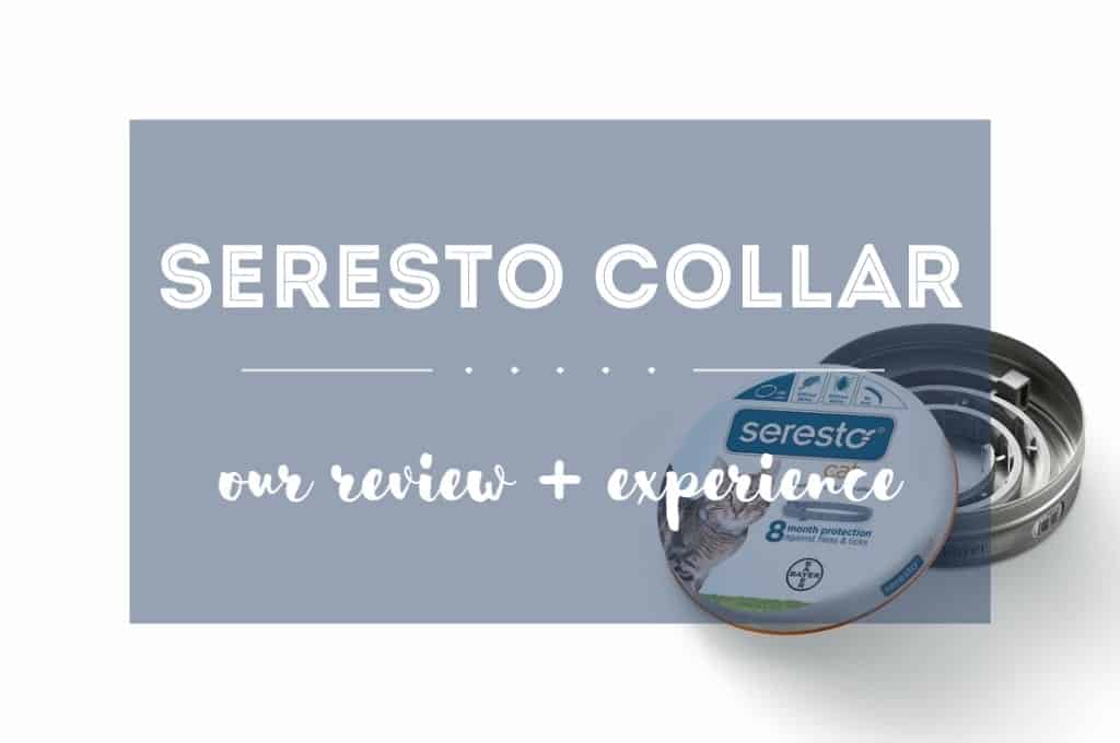 Seresto Cat Collar Review | Fluffy Kitty