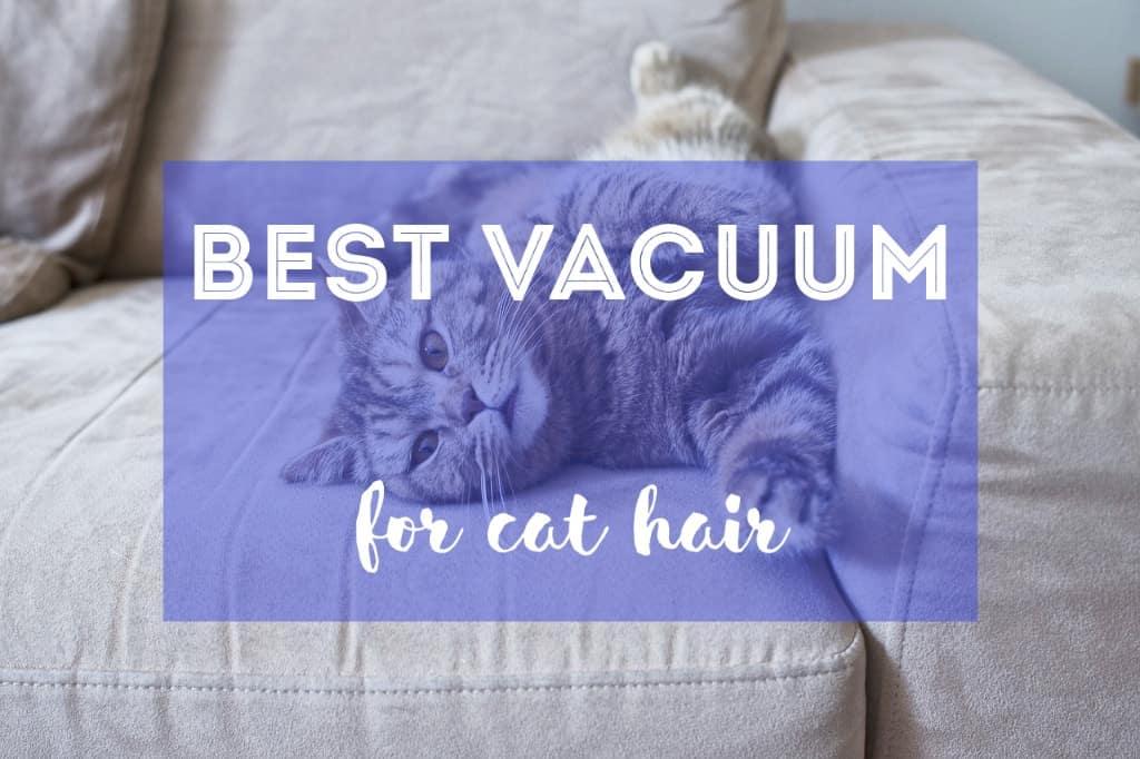 Best Vacuum Cleaner for Cat Hair | Fluffy Kitty