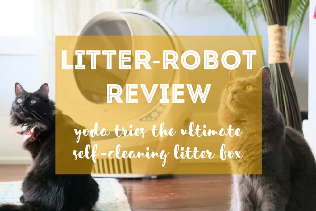 Litter-Robot III Open Air with Connect Review | Fluffy Kitty