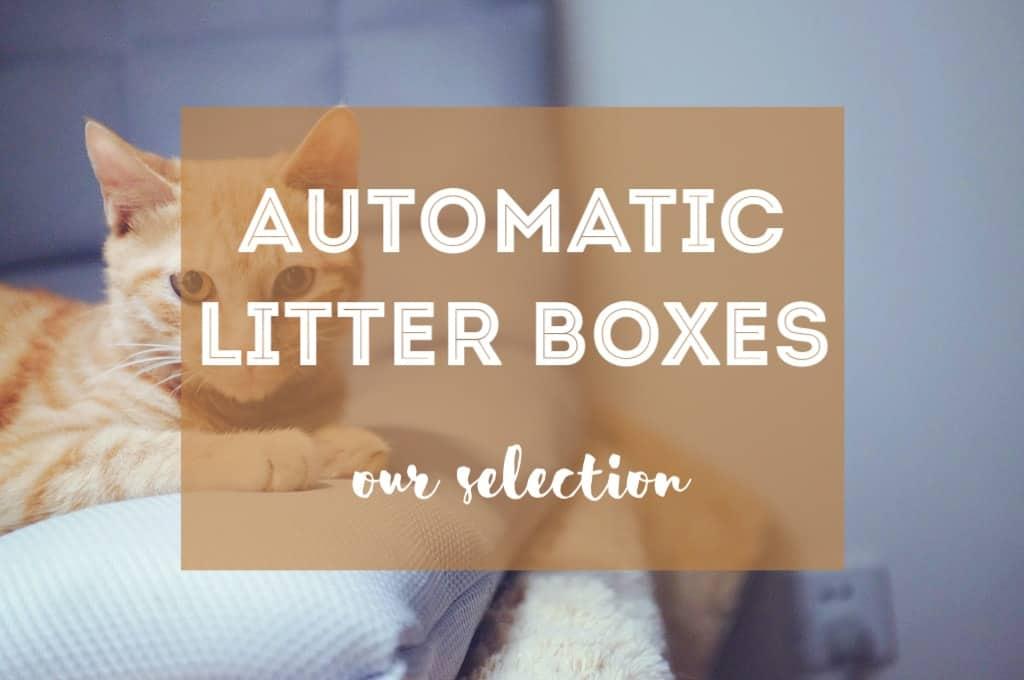 Best Self Cleaning Cat Litter Box   Fluffy Kitty