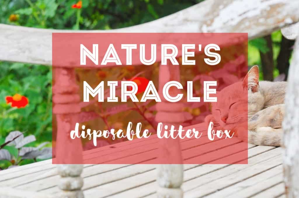 Nature's Miracle Disposable Litter Box Review | Fluffy Kitty