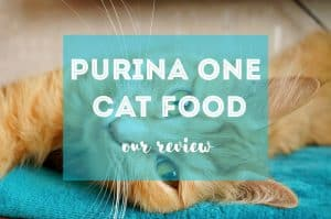 Purina One Cat Food Review | Fluffy Kitty