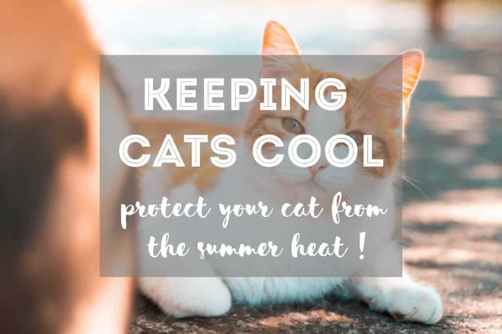 7 Tips on How to Keep Cats Cool in Summer | Fluffy Kitty
