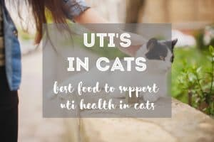 The Best Cat Food for Urinary Tract Infections in Cats - Guide + Tips | Fluffy Kitty