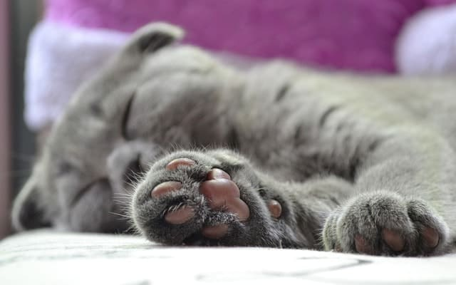 Dust Free Cat Litter | Fluffy Kitty