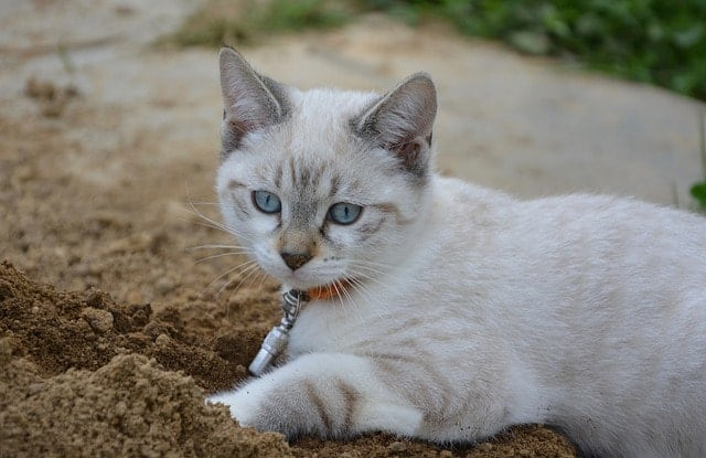 Flushable Cat Litter | Fluffy Kitty