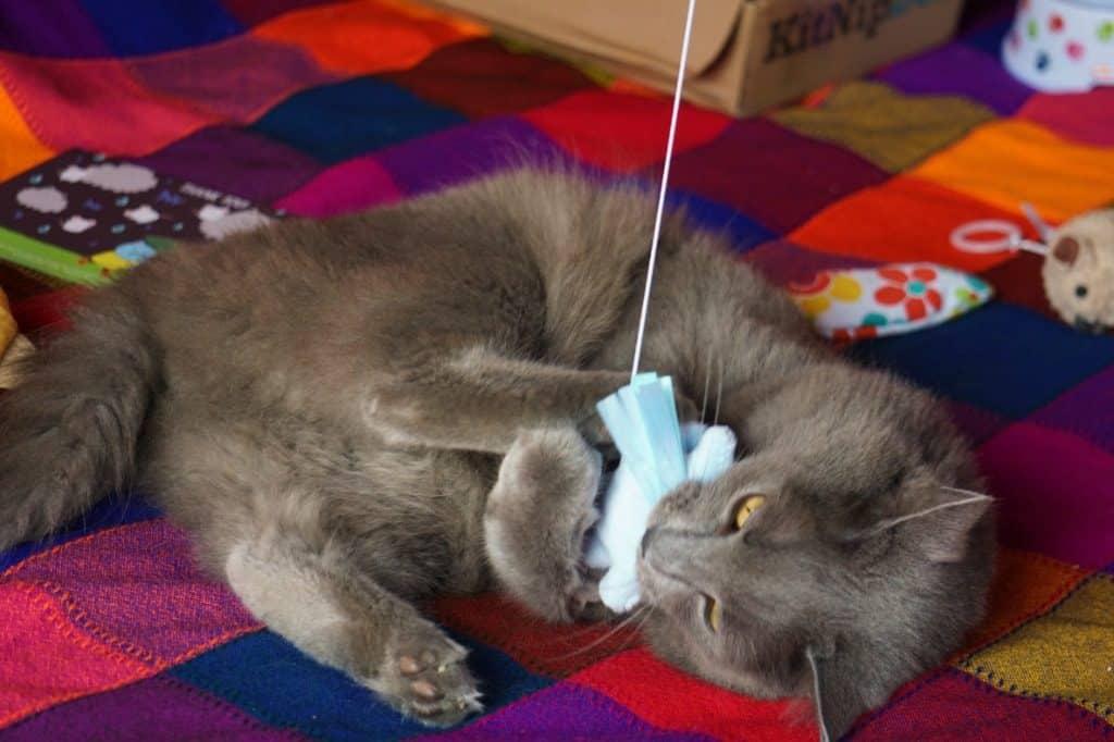KitNipBox Review | Fluffy Kitty