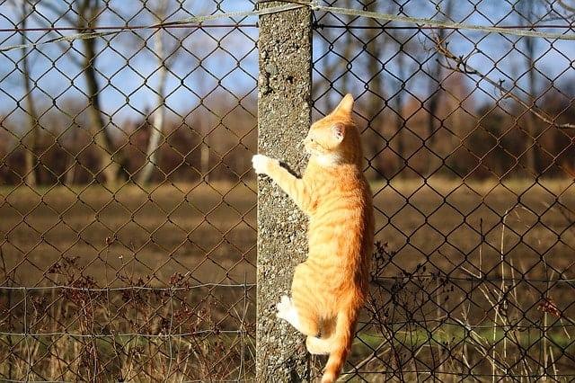 DIY Cat Climbing Shelves | Fluffy Kitty