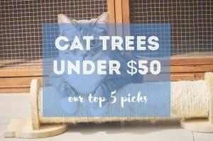 Cat Trees Under $50 | Fluffy Kitty