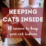 Do Cats Need Bathing? When to Bathe a Cat