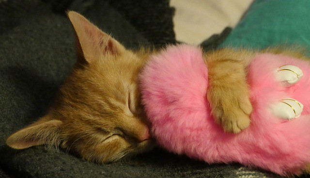 Eco-Friendly Cat Beds   Our Selection5