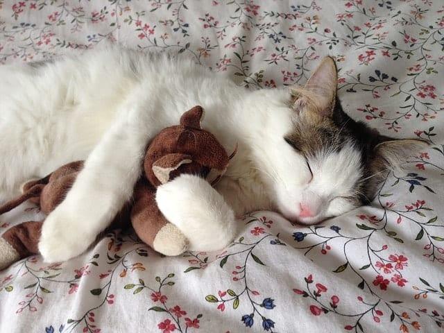 Eco-Friendly Cat Toys1