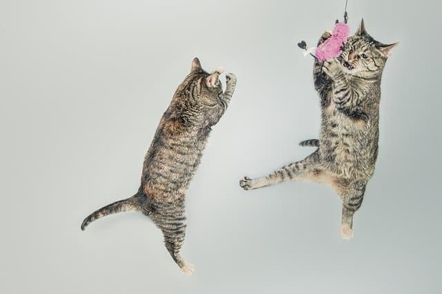 Eco-Friendly Cat Toys | Fluffy Kitty